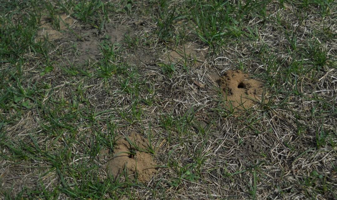 DSCN4539 - S bee burrows wide